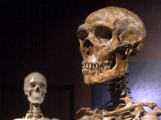 neanderthal (sağda) ve modern insan (solda) kafatasları
