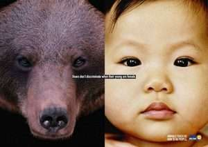 Ayılar, çocukları dişiyse ayrım yapmazlar.