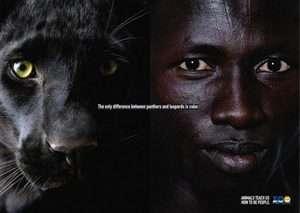 Panter ve leoparlar arasındaki tek fark renkleridir.