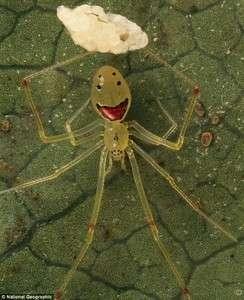 Gülümseyen örümcek