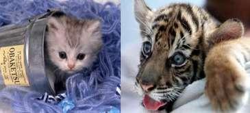 Baby Animalz