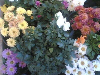 renk renk balkon çiçeklerimiz
