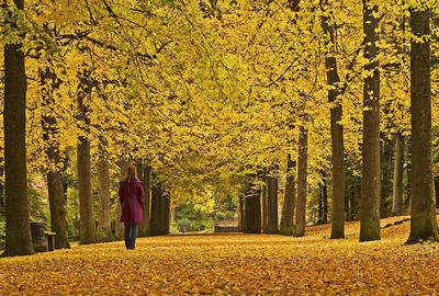 Terk ediliş değildi benimkisi, sonbahar akşamlarının ürpertici nefesiydi. Bir o kadar durgun ve bir o kadar da ümit vericiydi, yalnızlığın sembolizm izleri.