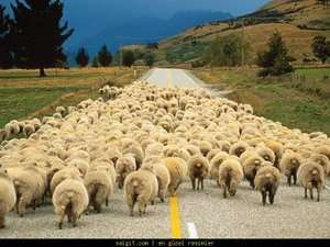 Koyun potansiyelimiz