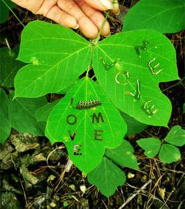 Böcek Yazıcı
