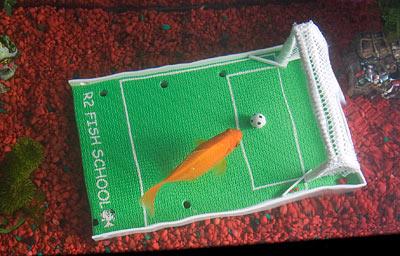R2 Fish Training School Kit