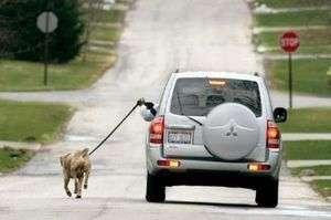 araba ile köpek gezdirmek