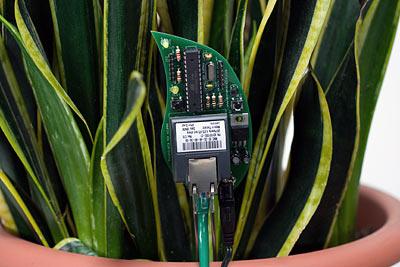Bitkileriniz Twitter da.